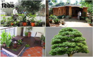 पेड़-पौधे सुंदर घर की पहचान