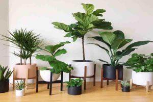 घर में पौधे, रोकें प्रदूषण
