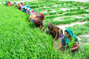 यूपीएल का स्वास्थ्य, कृषि और पशुपालन में अनूठा योगदान