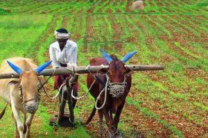खेती पर बल, केंद्र में किसान