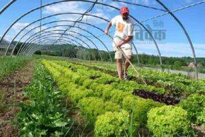सिक्किम में जैविक खेती एक भुलावा