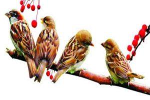 एक गाती चिड़िया