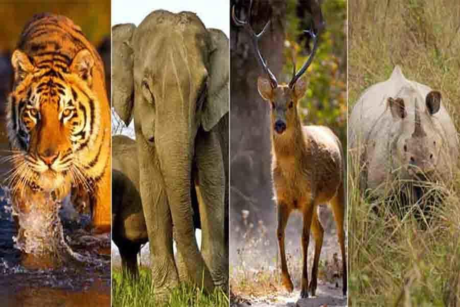 वन्य जीवों को भी जीने का अधिकार