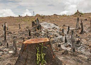 वन्य जीवों के नष्ट होते पर्यावास