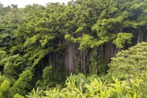 वनों की आत्मकथा