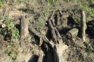 हिमालय के वन और वन्य जीव संकट में