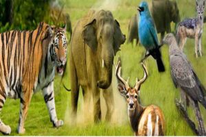 जैव विविधता भारत की धरोहर है