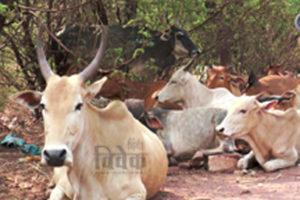 ग्रामीण समृद्धि एवं पर्यावरण संरक्षण के लिए जीव जंतुओं का संरक्षण जरूरी है