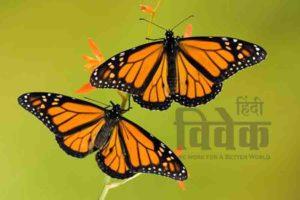 तितलियों का लम्बा सफर