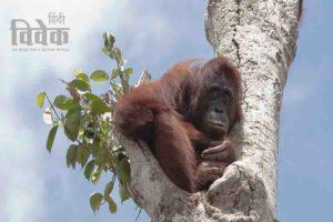 जंगलों का सफाया और समाप्त होते जानवर
