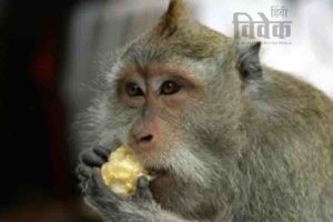 चालाक बंदर और बिल्लियाँ