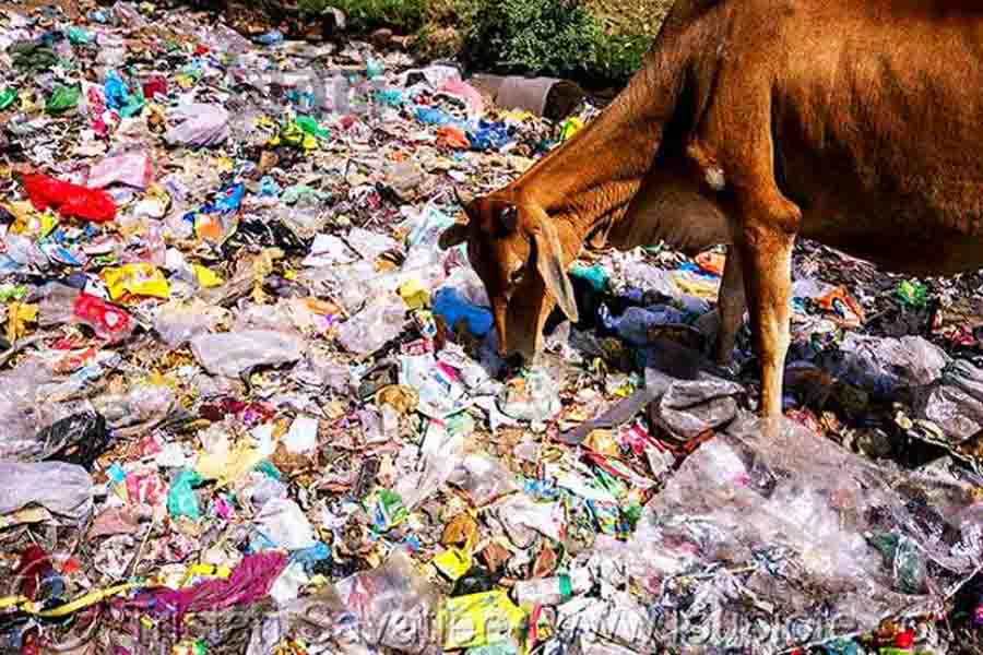 प्लास्टिक मनुष्य और पशुधन के जीवन के लिए भी यह बड़ा संकट