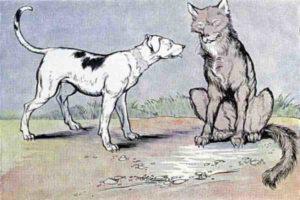 मूर्ख भेड़िया और समझदार पिल्ला