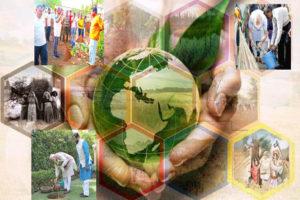 पर्यावरण की रक्षा और वैश्विक संस्थाएं