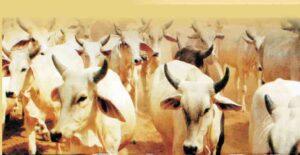 जीव एवं पर्मावरण रक्षक संस्था मसमस्त महाजनफ