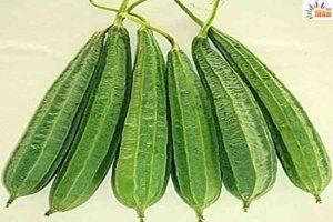 हरी सब्ज़ी तोरई रोगनाशक भी