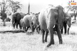 भोजन के लिए भटकते वन्य जीव