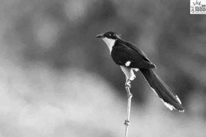 बारिश का संकेत देते पशु - पक्षी