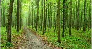 क्यों मनाया जाता है विश्व वानिकी दिवस - International Forest Day?