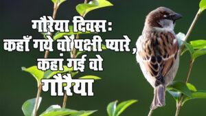 गौरेया दिवस: कहाँ गये वो पक्षी प्यारे, कहां गई वो गौरैया