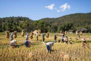 विकास में कृषि की महत्वपूर्ण भूमिका