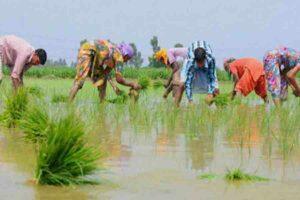 ग्रामीण विकास, कृषि और मोदी सरकार