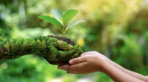 विश्व पर्यावरण दिवस: एक पेड़ जरुर लगाएं