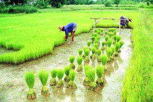 क्या भारत कृषिप्रधान रहेगा?