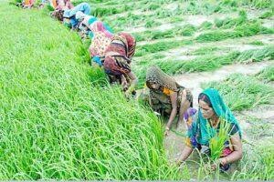 २०२२ तक किसानों की आय दुगुनी