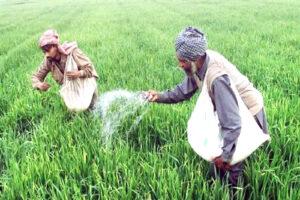 कृषि में मूल्यवर्धित उत्पादों का बड़ा हिस्सा